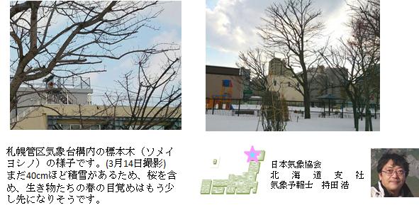 桜開花予想のたより(北海道)