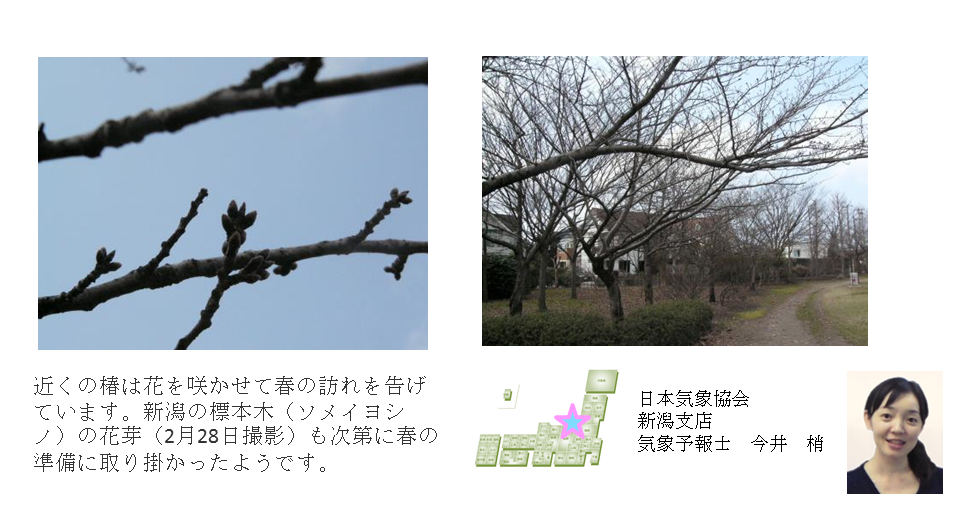 日本気象協会新潟支店コメント