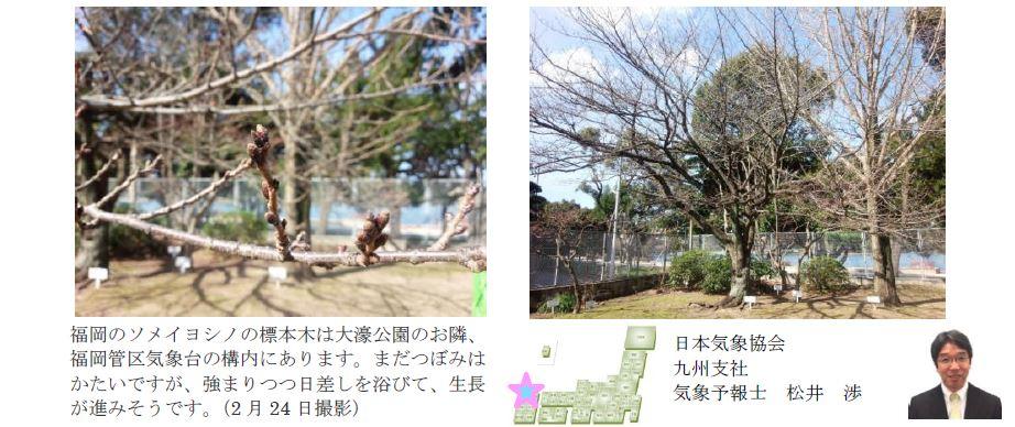 桜開花予想のたより(九州)