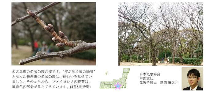 桜開花予想のたより(リレートーク)