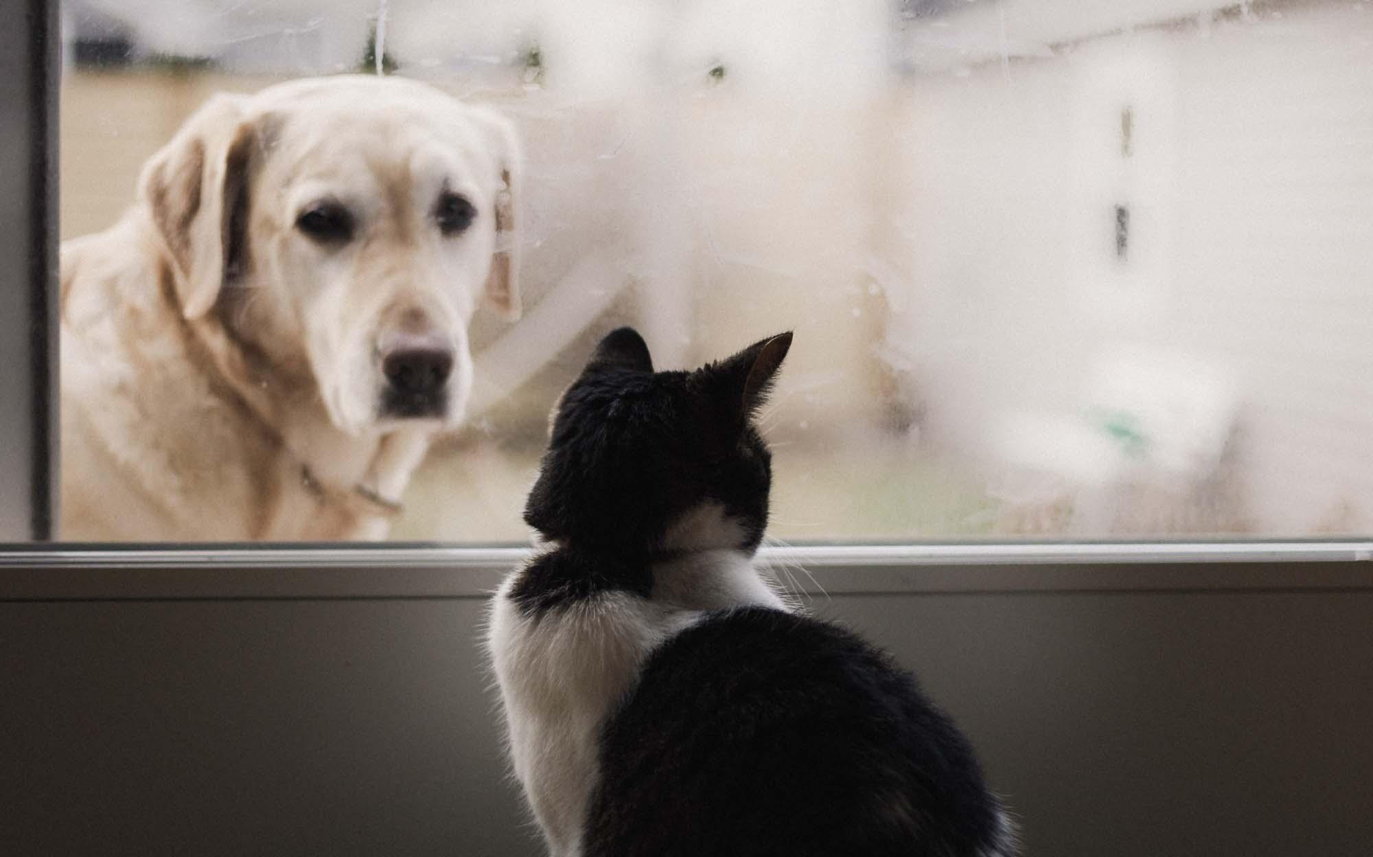 「トクする!防災」プロジェクト×日本動物愛護協会 ペットの防災対策コンテンツを公開