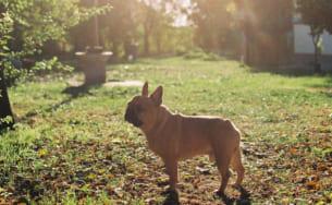 「熱中症ゼロへ」プロジェクト 愛犬の熱中症に関する調査  愛犬の4分の1が熱中症にかかった経験あり