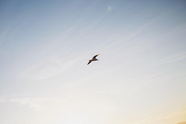 日本気象協会「鳥類観測技術」で台湾の「洋上風力発電の鳥類事後調査業務」に参画 ~日本の鳥類の観測技術が海外のインフラ設備に 初採用~
