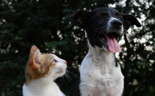 ペットも熱中症に注意!愛犬の4分の1が経験あり ~持ち歩ける「イヌ・ネコの熱中症予防対策マニュアル」を今年も配布~