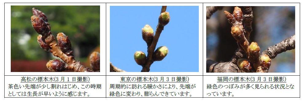 各地の標本木の様子